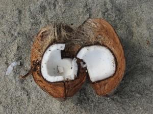 El coco, presente en todos sitios