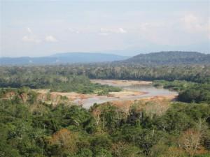 Vista de la jungla desde un mirador