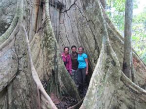 Un árbol muy muy grande