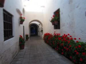 Geranios en una de las calles del monasterio