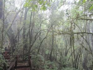 Un precioso (y tranquilo) bosque